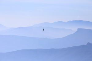 voltor comú(gyps fulvus)foto J.Sargatal